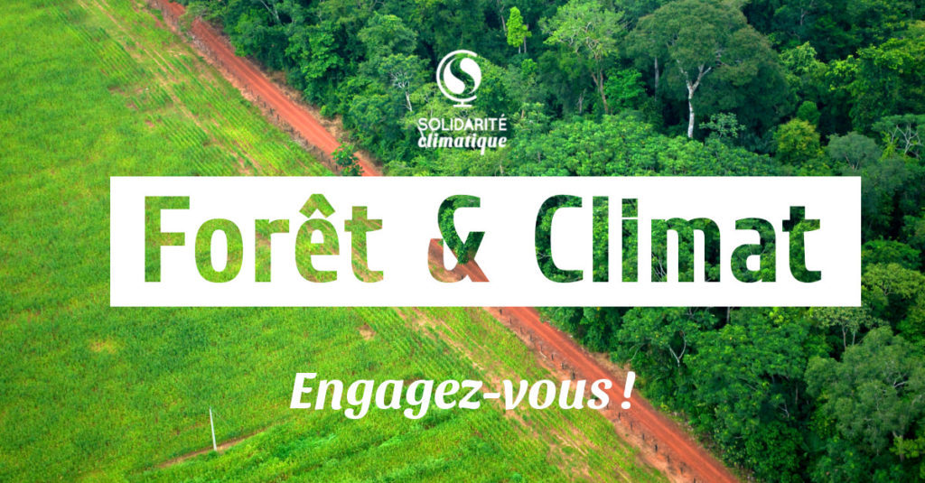 foret climat